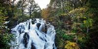 Mid-Wales Wonder